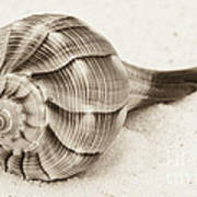 Sepia Shell Poster