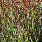 September Grasses By Jrr Poster