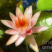 Serene Pink Waterlily  Poster