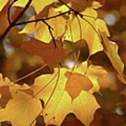 Shadow Dancing Leaves Poster