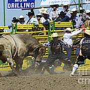 Rodeo Shaking It Up Poster