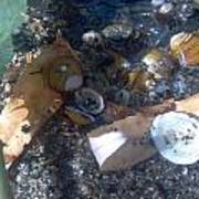 Shell Beach Poster