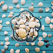 Shells In Bowl Poster