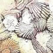 Shells Poster