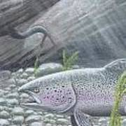 Shelter- Rainbow Trout Poster