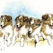 Sheltie Pups Poster