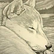 Shiba Inu Poster