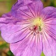 Shimmer Flower Poster