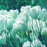 Shimmering Tulips Poster