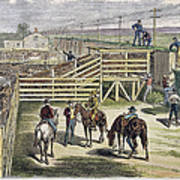 Shipping Cattle, 1877 Poster