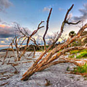 Shoreline Beach Driftwood And Grass Poster by Jenny Ellen Photography