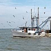 Shrimp Boat And Gulls Poster
