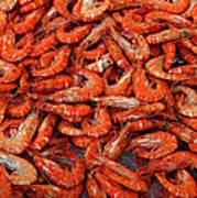 Shrimp Poster