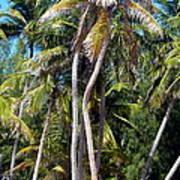 Shy Palms Poster