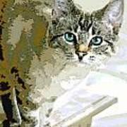 Siamese Mix Kitten Poster by Dorothy Walker