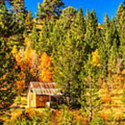 Sierra Nevada Rustic Americana Barn With Aspen Fall Color Poster