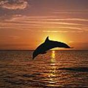 Silhouette Of Leaping Bottlenose Poster