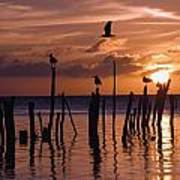 Silhouette Of Seagulls On Posts In Sea Poster