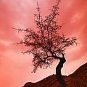 Silhouette Of Shrub Tree Poster