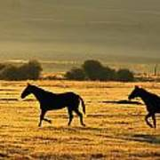 Silhouetted Horses Running Poster