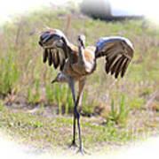 Silly Sandhill Crane Chick Poster