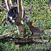Silver Tabby And Wild Rabbit Poster