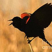 Singing At Sunset Poster