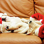 Six Puppies Sleep On Sofa, Some Wear Santa Hats Poster