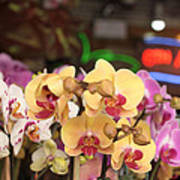 Sixth Avenue Orchids Poster by Denice Breaux