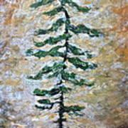 Skinny White Pine Poster
