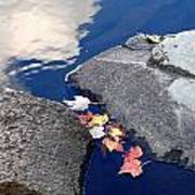 Sky Reflection Leaves And Rocks Poster
