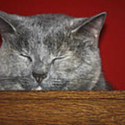 Sleeping Pixie Poster