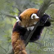sleeping Small Panda Poster