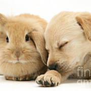 Sleepy Puppy And Rabbit Poster
