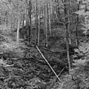 Slovenian Forest In Black And White Poster