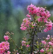Slow Rain Poster