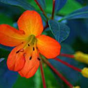 Small Orange Flower Poster