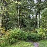 Smoky Mountain Path Poster