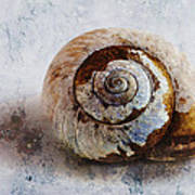 Snail Shell Poster by Ron Jones