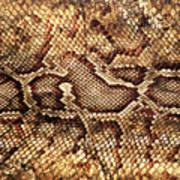 Snake Skin Poster by Abner Merchan