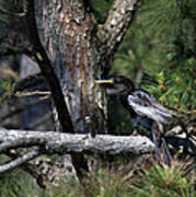 Snakebird At The Rookery Poster
