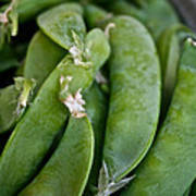 Snap Peas Please Poster