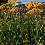Sneezeweed And Lupine Wildflowers At Lake Irwin Poster