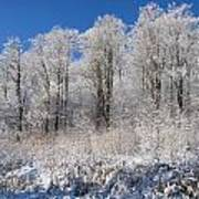 Snow Covered Maple Trees Iron Hill Poster by David Chapman
