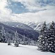 Snow Covered Pine Trees On Mountain Poster