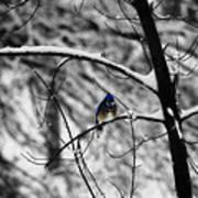 Snow On Beak Poster