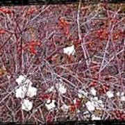Snowberries And Rosehips Poster