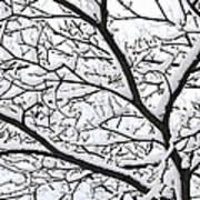 Snowy Branch Poster