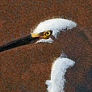 Snowy Egret Profile Painterly Poster