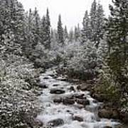 Snowy Foliage Along Stream In Autumn Poster